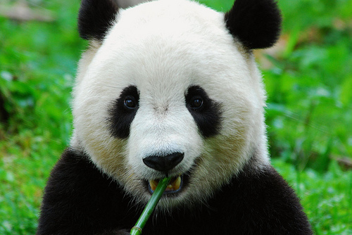 二やっとしたパンダがかわいい